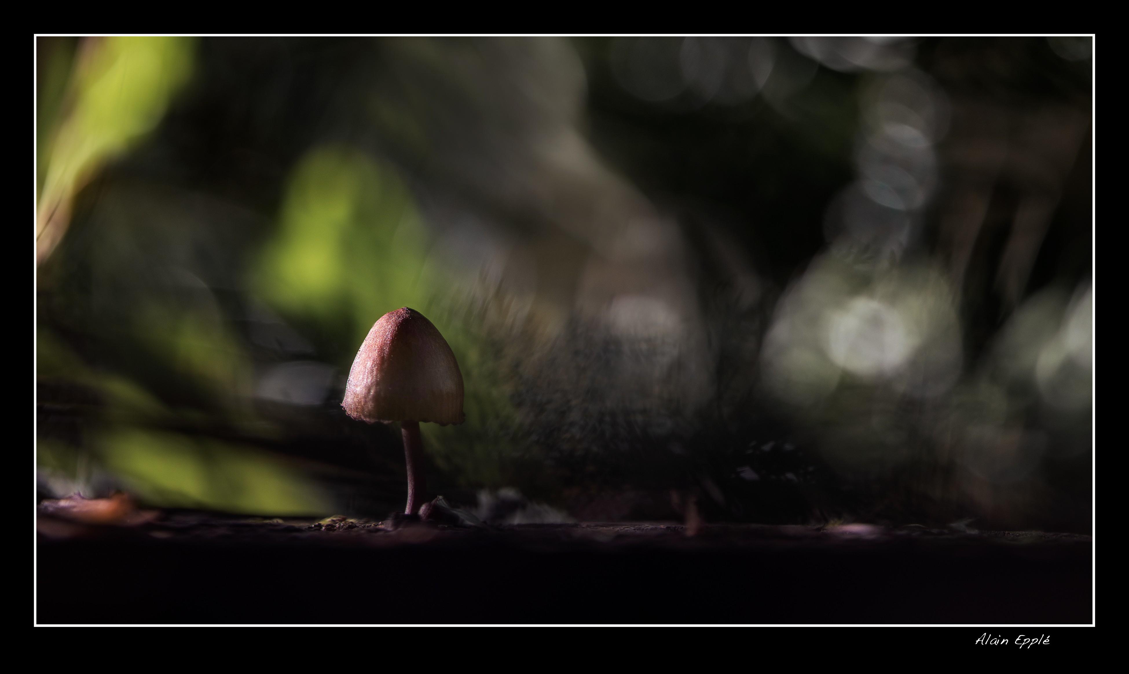 Sous les aurores boréales - MC15