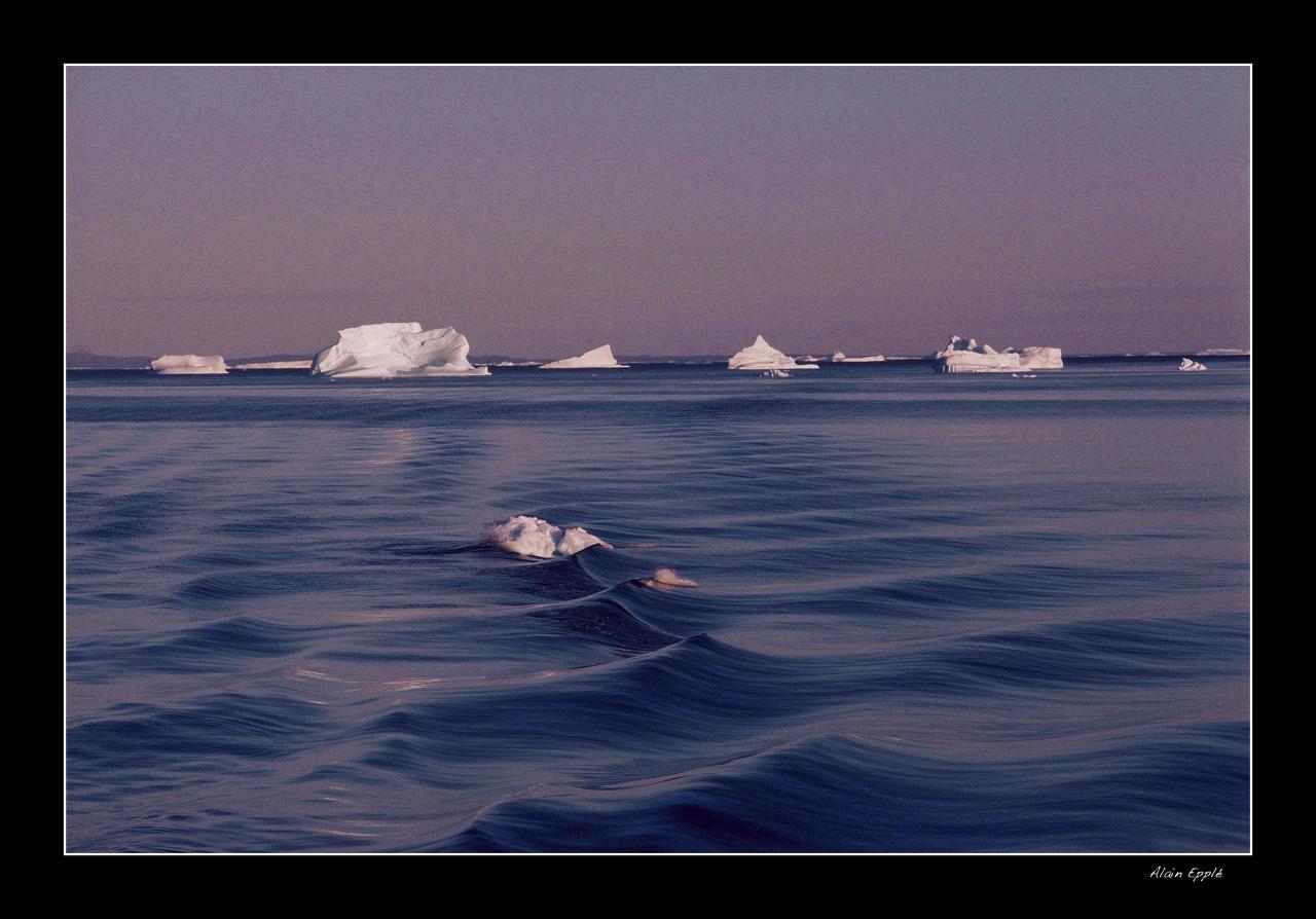 Les Vagues Baie Disko - G10