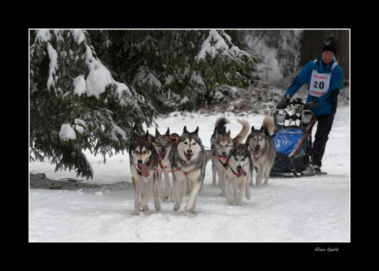 Saignelegier course chiens traineaux - CH13