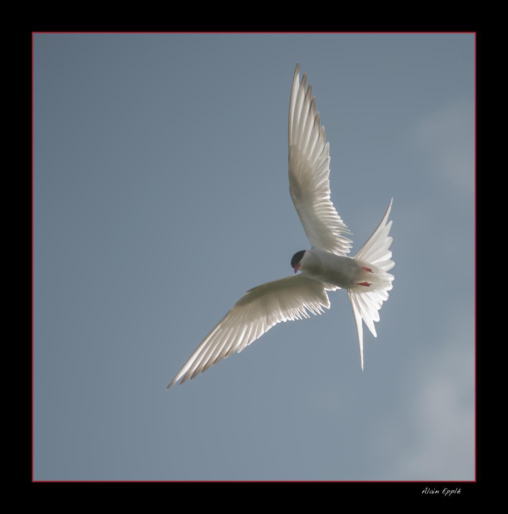Sterne - OS11