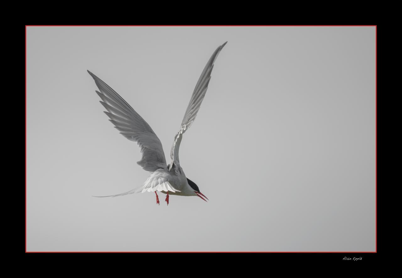 Sterne - OS13